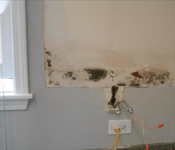 Mold in a Kitchen - Downers Grove Before