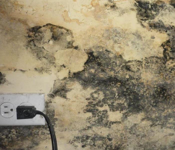 Mold Remediation Mold is Present almost everywhere!