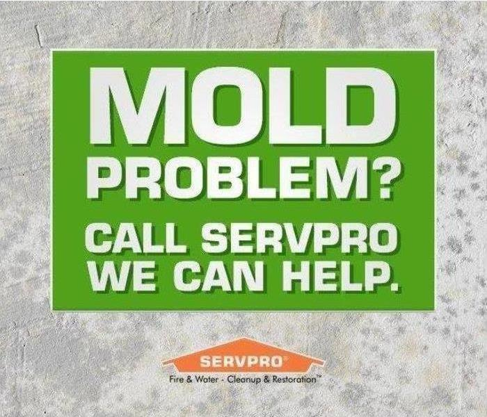 Mold Remediation Take Action against Mold Growth!